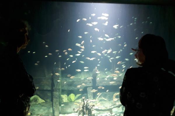 Lehrkräfte vorm Aquarium im Ozeaneum
